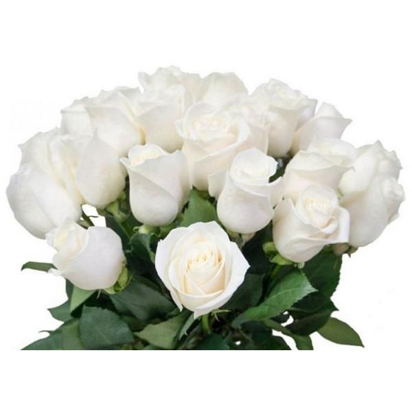 Срезка Роза Белая (Кения)