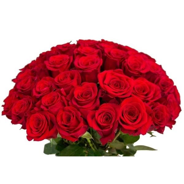 Срезка Роза Красная (Эквадор)