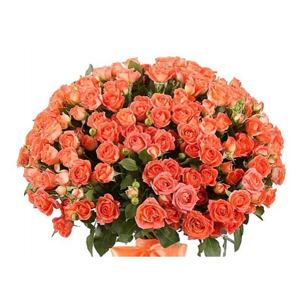 Срезка Роза Оранжево-розовая (Эквадор)