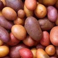 Картофель-семенной