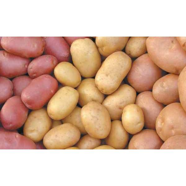 Картофель семенной Смесь Сортов